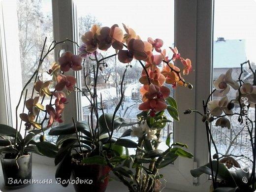Здравствуйте мастера и мастерицы Страны Мастеров.Сегодня у меня расцвели орхидейки с холодного фарфора. фото 13