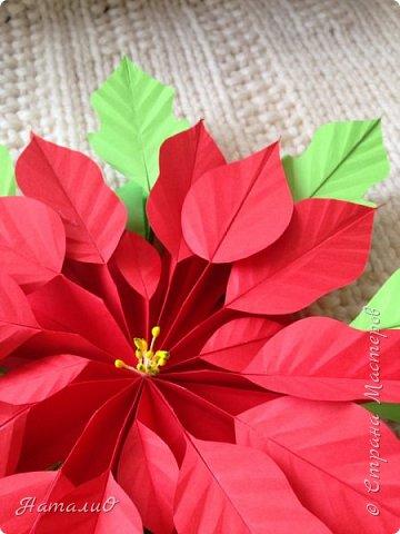 Здравствуйте, все-все-все!!! Поздравляю вас с Новым Годом и Рождеством! Желаю счастья, любви, взаимопонимания и мира! И, конечно же, радости творчества! Увидев МК Татьяны Николаевны , я, как и многие из нас, была просто поражена этой красотой! Сразу решила сделать пуансеттию - рождественскую звезду, она действительно восхитительна!  Приглашаю вас посмотреть, что у меня получилось! фото 4