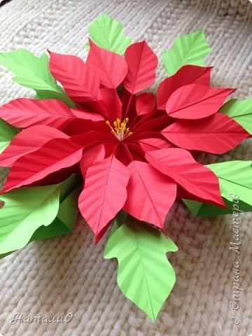 Здравствуйте, все-все-все!!! Поздравляю вас с Новым Годом и Рождеством! Желаю счастья, любви, взаимопонимания и мира! И, конечно же, радости творчества! Увидев МК Татьяны Николаевны , я, как и многие из нас, была просто поражена этой красотой! Сразу решила сделать пуансеттию - рождественскую звезду, она действительно восхитительна!  Приглашаю вас посмотреть, что у меня получилось! фото 6