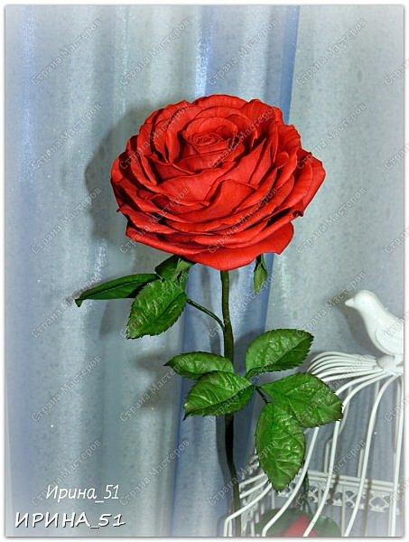 Здравствуйте! Сегодня я к Вам с новым Мк. Простая роза с тонировкой сухой пастелью. Мастер-класс. Автор Ирина_51 (вы можете найти меня  в контакте по имени  Ирина Сашина) фото 49