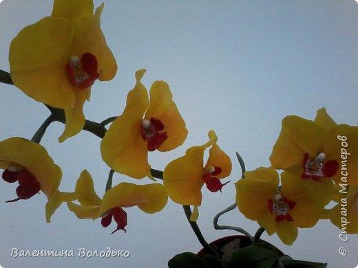 """Здравствуйте дорогие жители Страны Мастеров!!!Дочка заказала орхидейку т.к. живые у нее не растут,а ей как она говорит""""хочется быть хозяйкой"""", вот представляю ее вашему вниманию. фото 3"""