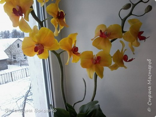 """Здравствуйте дорогие жители Страны Мастеров!!!Дочка заказала орхидейку т.к. живые у нее не растут,а ей как она говорит""""хочется быть хозяйкой"""", вот представляю ее вашему вниманию. фото 6"""
