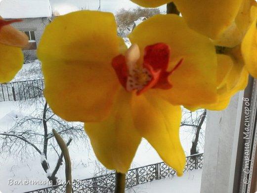 """Здравствуйте дорогие жители Страны Мастеров!!!Дочка заказала орхидейку т.к. живые у нее не растут,а ей как она говорит""""хочется быть хозяйкой"""", вот представляю ее вашему вниманию. фото 8"""