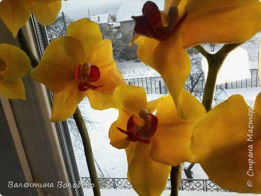 """Здравствуйте дорогие жители Страны Мастеров!!!Дочка заказала орхидейку т.к. живые у нее не растут,а ей как она говорит""""хочется быть хозяйкой"""", вот представляю ее вашему вниманию. фото 7"""