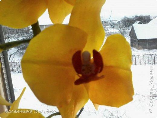 """Здравствуйте дорогие жители Страны Мастеров!!!Дочка заказала орхидейку т.к. живые у нее не растут,а ей как она говорит""""хочется быть хозяйкой"""", вот представляю ее вашему вниманию. фото 9"""