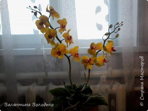 """Здравствуйте дорогие жители Страны Мастеров!!!Дочка заказала орхидейку т.к. живые у нее не растут,а ей как она говорит""""хочется быть хозяйкой"""", вот представляю ее вашему вниманию. фото 2"""