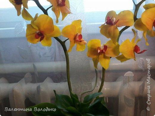 """Здравствуйте дорогие жители Страны Мастеров!!!Дочка заказала орхидейку т.к. живые у нее не растут,а ей как она говорит""""хочется быть хозяйкой"""", вот представляю ее вашему вниманию. фото 10"""