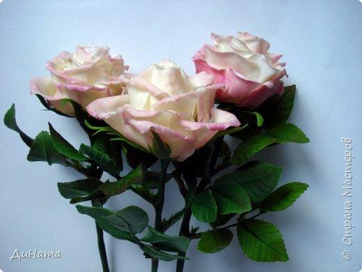 роза фото 10