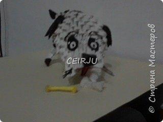 perro фото 2