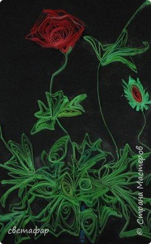 Маки. Общий вид.  Большое спасибо учителям и вдохновителям этой работы   Инне, Дватайе, Кукушечке фото 14