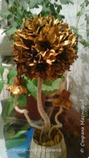 мой цветик-сухоцветик фото 2