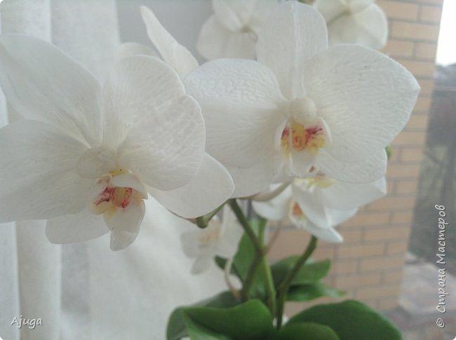 Орхидея фаленопсис из холодного фарфора. фото 1