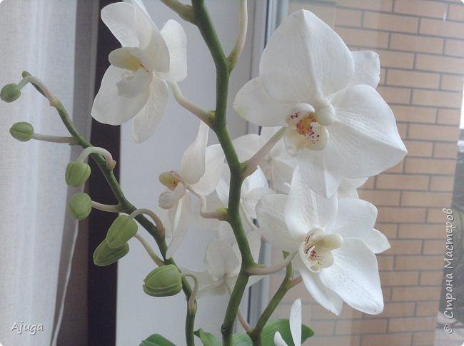 Орхидея фаленопсис из холодного фарфора. фото 6