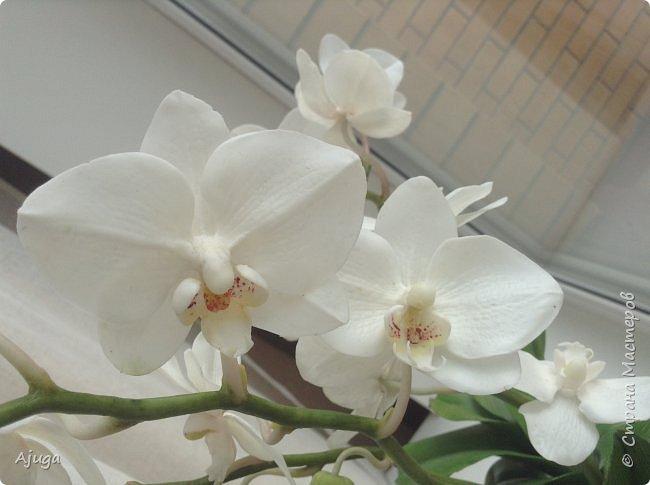 Орхидея фаленопсис из холодного фарфора. фото 9