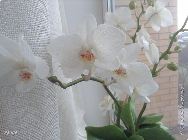 Орхидея фаленопсис из холодного фарфора. фото 16