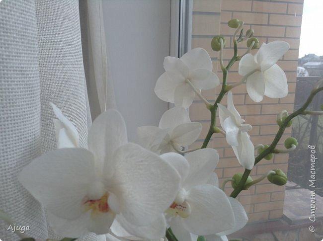 Орхидея фаленопсис из холодного фарфора. фото 17
