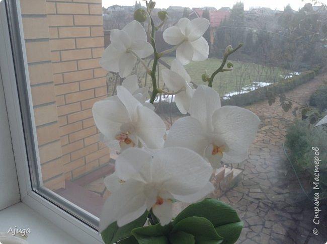Орхидея фаленопсис из холодного фарфора. фото 18