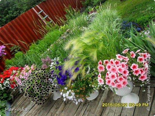 """Да,да о нём, о любимом саде! Добрый день Мастера и Мастерицы! Не за горами новый """"полевой"""" сезон, а значит пора готовиться к новым композициям в саду! Какие же это приятные хлопоты! фото 12"""