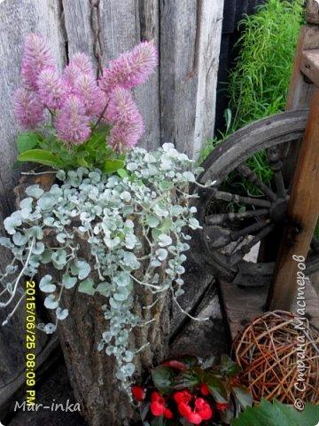 """Да,да о нём, о любимом саде! Добрый день Мастера и Мастерицы! Не за горами новый """"полевой"""" сезон, а значит пора готовиться к новым композициям в саду! Какие же это приятные хлопоты! фото 10"""