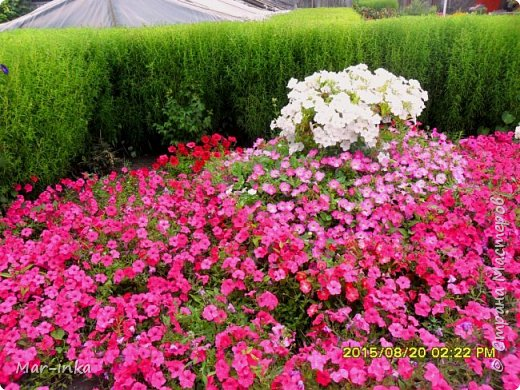"""Да,да о нём, о любимом саде! Добрый день Мастера и Мастерицы! Не за горами новый """"полевой"""" сезон, а значит пора готовиться к новым композициям в саду! Какие же это приятные хлопоты! фото 14"""