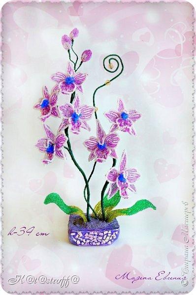 "Орхидея и ""Хранитель монет"" фото 1"