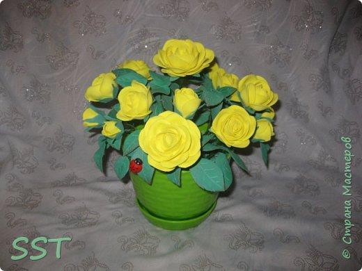 Желтые розы в горшочке. фото 2