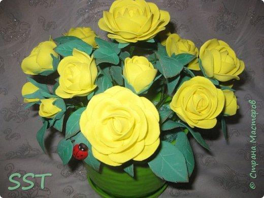 Желтые розы в горшочке. фото 3
