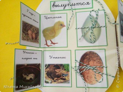 """Здравствуйте дорогие жители Страны мастеров.  А вы знаете что появилось раньше - яйцо или курица? Вопрос конечно философский. А вот такое простое, обычное и привычное яйцо при ближайшем рассмотрении оказывается очень интересным и удивительным.  Вдохновившись опытами и экспериментами, которые показала на своей страничке мама.Вани.и.Маргоши  http://stranamasterov.ru/user/352927 я тоже решила поэкспериментировать со своими детками. Перечитав в интернете множество вариантов домашних опытов, для себя разделила их на группы. А по """"яичной"""" группе решила сделать ещё книжечку, которую как обычно передадим в детский садик. Ну вот, собственно, и сама книжка - в форме яйца. Обложка мягкая, из хлопка, с поролоновой прослойкой. Желток из фетра. фото 11"""