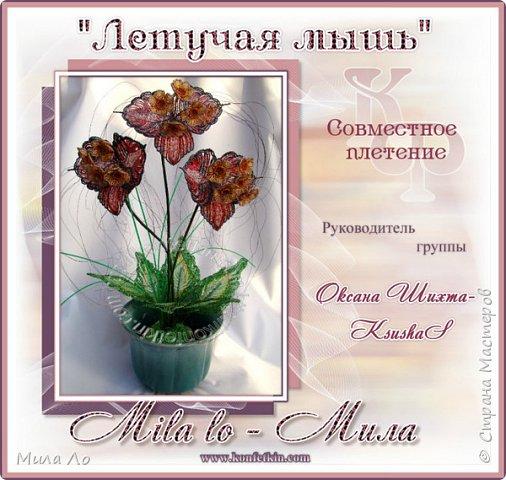 Орхидея Летучая мышь