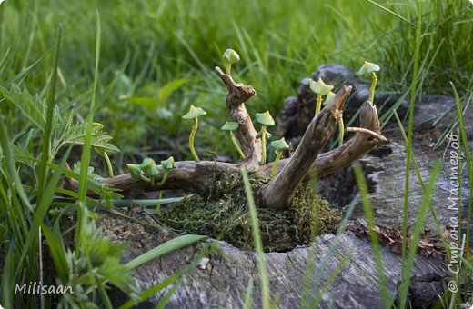 Размеры самого большого грибочка 3 см. Основа - коряжка из елового корня, задекорированного мхом.