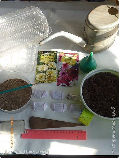 Здравствуйте дорогие мастера и мастерицы! В прошлом году я поделилась семенами цветочных культур с некоторыми мастерицами, в частности там были семена петунии и другие культуры, имеющие микроскопические семена. Я обещала, что в начале посевного сезона я познакомлю их с некоторыми моими наработками в этом деле. Так что кому будет интересно присоединяйтесь. фото 4