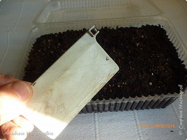 Здравствуйте дорогие мастера и мастерицы! В прошлом году я поделилась семенами цветочных культур с некоторыми мастерицами, в частности там были семена петунии и другие культуры, имеющие микроскопические семена. Я обещала, что в начале посевного сезона я познакомлю их с некоторыми моими наработками в этом деле. Так что кому будет интересно присоединяйтесь. фото 9