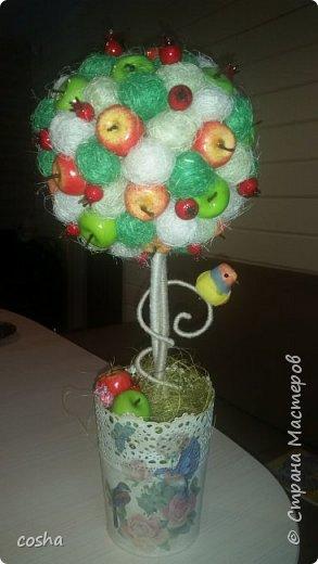 За окошком зима, а у меня на окошке выросла яблонька фото 2