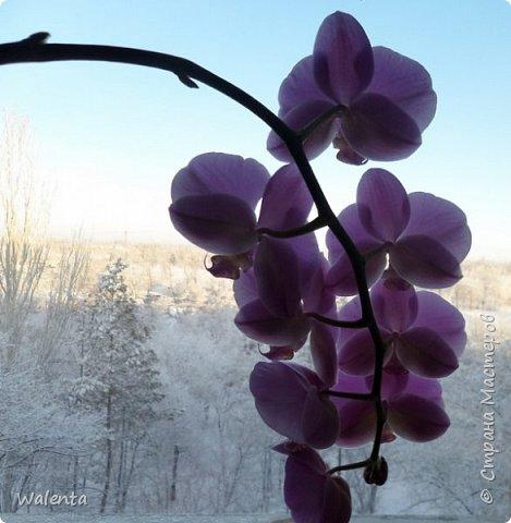 Букетик с орхидеями.Благодарна Анастасии Бертовой за идею и МК орхидей и фантазийного цветка.По ее МК сделаны крупные листочки.. фото 4