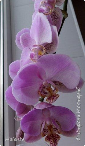 Букетик с орхидеями.Благодарна Анастасии Бертовой за идею и МК орхидей и фантазийного цветка.По ее МК сделаны крупные листочки.. фото 5