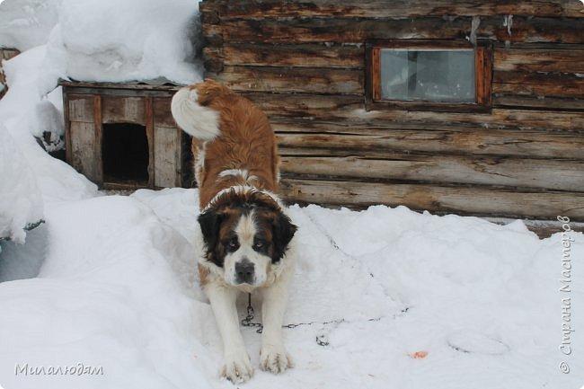 У нас закончились морозы и сразу начался буран и снегопад. фото 2