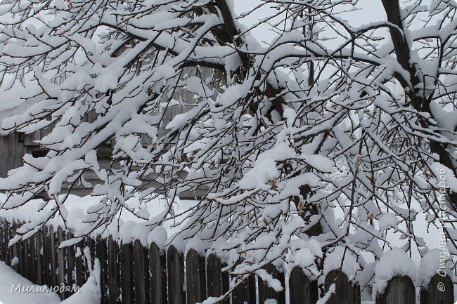 У нас закончились морозы и сразу начался буран и снегопад. фото 1