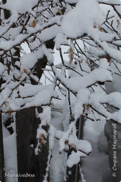 У нас закончились морозы и сразу начался буран и снегопад. фото 4