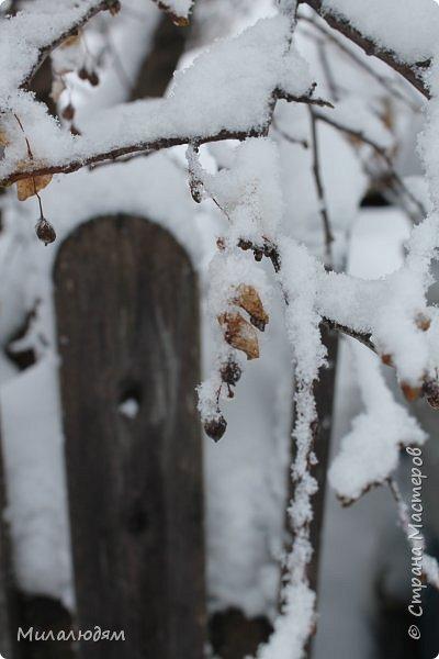 У нас закончились морозы и сразу начался буран и снегопад. фото 5