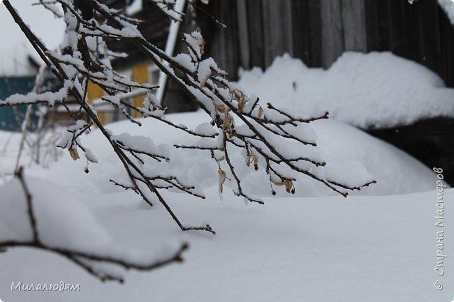 У нас закончились морозы и сразу начался буран и снегопад. фото 6