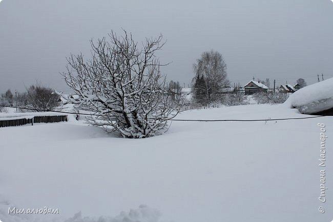 У нас закончились морозы и сразу начался буран и снегопад. фото 12