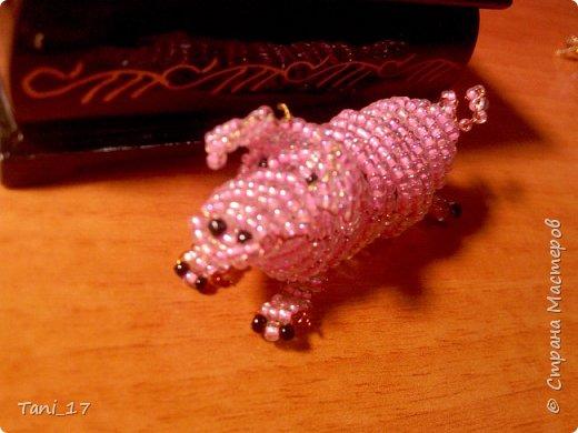 Свинка и котята. фото 4