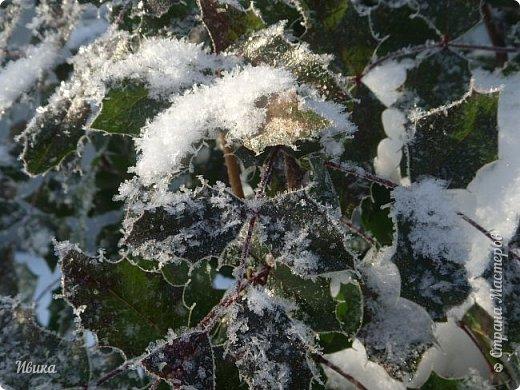 """Зима у нас очень """"странная"""" в этом году. Снежных, морозных, по настоящему зимних дней, практически, не было. Но... в Новый год у нас был и снег пушистый и мороз трескучий! Да такой, что фото всей этой красоты мне """"обошлось"""" в замерзшие почти до лёгкого отмораживания рук (в варежках-перчатках нуууу очень неудобно было). -22-24 мороза, %70-75 влажности - и вот такая красота на деревьях и кустах! Часть фото сделано  на фотоаппарат, часть - на телефон. Фотоаппарат отказался работать в таких условиях, телефон ему """"поддакивал"""".  Оно и понятно, в тепле-в добре оно получше за зимней красотой наблюдать. Предлагаю и вам посмотреть, то что успела сфотографировать.  Это - грецкий орех. Приодели его в такой вот наряд. Лёгкая наледь и иней такой бархатистый на вид. И всё это на фоне голубого неба. фото 14"""