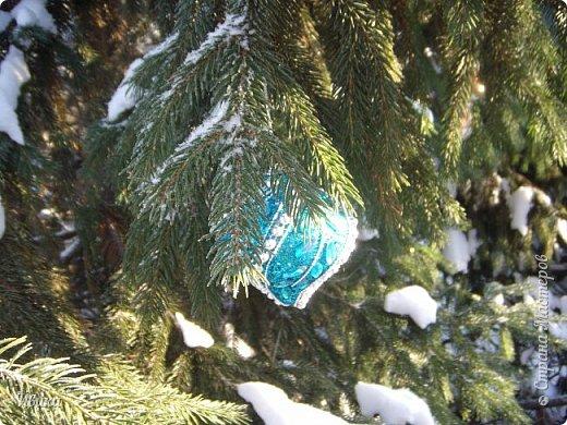 """Зима у нас очень """"странная"""" в этом году. Снежных, морозных, по настоящему зимних дней, практически, не было. Но... в Новый год у нас был и снег пушистый и мороз трескучий! Да такой, что фото всей этой красоты мне """"обошлось"""" в замерзшие почти до лёгкого отмораживания рук (в варежках-перчатках нуууу очень неудобно было). -22-24 мороза, %70-75 влажности - и вот такая красота на деревьях и кустах! Часть фото сделано  на фотоаппарат, часть - на телефон. Фотоаппарат отказался работать в таких условиях, телефон ему """"поддакивал"""".  Оно и понятно, в тепле-в добре оно получше за зимней красотой наблюдать. Предлагаю и вам посмотреть, то что успела сфотографировать.  Это - грецкий орех. Приодели его в такой вот наряд. Лёгкая наледь и иней такой бархатистый на вид. И всё это на фоне голубого неба. фото 21"""