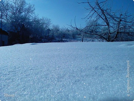"""Зима у нас очень """"странная"""" в этом году. Снежных, морозных, по настоящему зимних дней, практически, не было. Но... в Новый год у нас был и снег пушистый и мороз трескучий! Да такой, что фото всей этой красоты мне """"обошлось"""" в замерзшие почти до лёгкого отмораживания рук (в варежках-перчатках нуууу очень неудобно было). -22-24 мороза, %70-75 влажности - и вот такая красота на деревьях и кустах! Часть фото сделано  на фотоаппарат, часть - на телефон. Фотоаппарат отказался работать в таких условиях, телефон ему """"поддакивал"""".  Оно и понятно, в тепле-в добре оно получше за зимней красотой наблюдать. Предлагаю и вам посмотреть, то что успела сфотографировать.  Это - грецкий орех. Приодели его в такой вот наряд. Лёгкая наледь и иней такой бархатистый на вид. И всё это на фоне голубого неба. фото 27"""