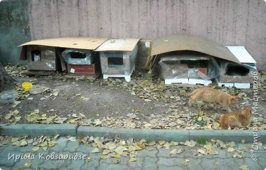 Много лет я фотографировала котов и кошек, гуляя с внуком. Вот эти фотографии. Это кот Кузя. Он долгое время жил в парке, где мы гуляли. Кто-то его принёс туда из дома и оставил. Кот был ручной и ласковый. Его хотели забрать к себе домой люди, наверное и забрали.  фото 21