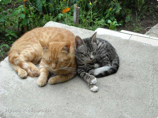 Много лет я фотографировала котов и кошек, гуляя с внуком. Вот эти фотографии. Это кот Кузя. Он долгое время жил в парке, где мы гуляли. Кто-то его принёс туда из дома и оставил. Кот был ручной и ласковый. Его хотели забрать к себе домой люди, наверное и забрали.  фото 15