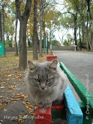 Много лет я фотографировала котов и кошек, гуляя с внуком. Вот эти фотографии. Это кот Кузя. Он долгое время жил в парке, где мы гуляли. Кто-то его принёс туда из дома и оставил. Кот был ручной и ласковый. Его хотели забрать к себе домой люди, наверное и забрали.  фото 19