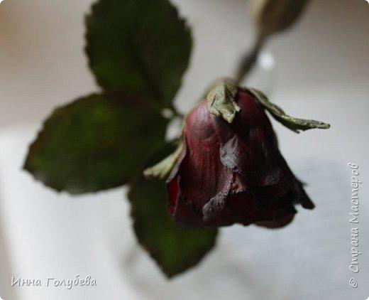 Экспериментирую)))Давно мне не дает покоя увядшие розы,так хочется научиться их лепить.Вот учусь)))Еще работать и работать над ней,но первый шаг в этом направлении сделан! фото 3