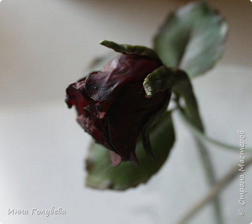 Экспериментирую)))Давно мне не дает покоя увядшие розы,так хочется научиться их лепить.Вот учусь)))Еще работать и работать над ней,но первый шаг в этом направлении сделан! фото 2
